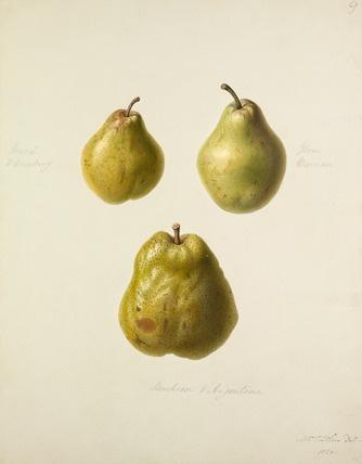 Художник и иллюстратор Augusta Innes Withers (1792-1877) (72 фото)