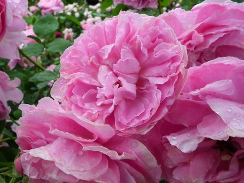Цветы (32 фото)