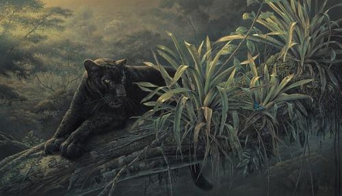 Животный мир на картинах канадского художника Denis Mayer Jr. (25 работ)