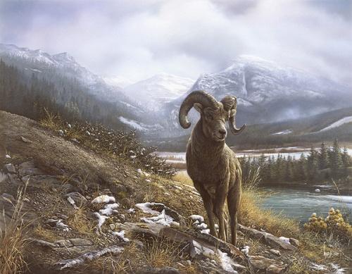 Животный мир на картинах канадского художника Denis Mayer Jr. (25 фото)