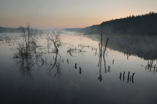 Фотограф Денис Бодров (158 фото)
