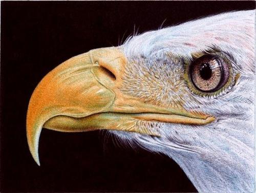 Фотореалистичные картины шариковыми ручками художника Сэмюэль Сильва (20 фото)