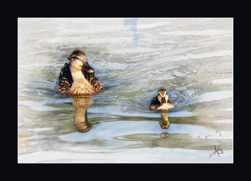 Изображения животных от Альберто Гильена (28 работ)