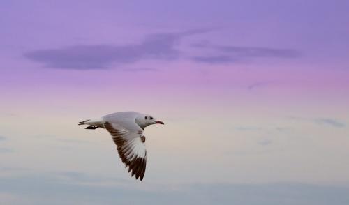 Мир в Фотографии - World In Photo 830 (62 фото)