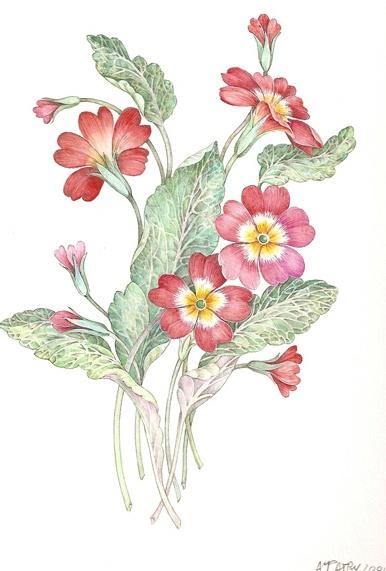Акварельные работы Anne Marie Patry-Belluteau (81 фото)