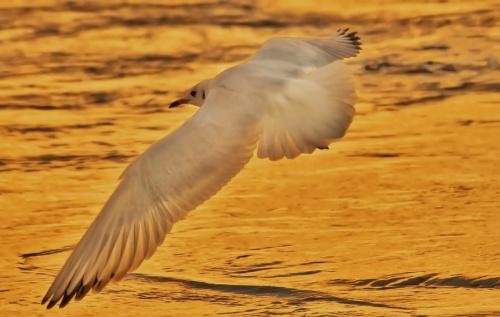 Мир в Фотографии - World In Photo 836 (66 фото)