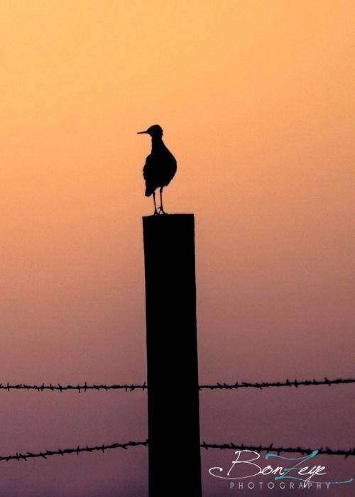 Мир в Фотографии - World In Photo 831 (62 фото)
