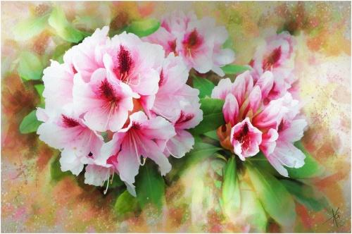 Цветы от Альберто Гильена 2 (50 работ)