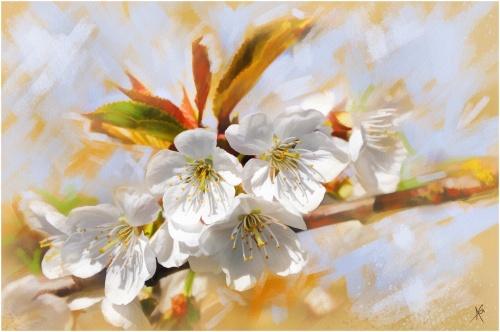 Цветы от Альберто Гильена 2 (50 фото)