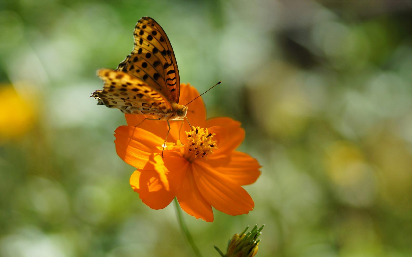 Фото клипарт – Луга, цветы, лето (76 ...: nevsepic.com.ua/ostalnoe-bez-razdela/page,1,20600-foto-klipart-luga...