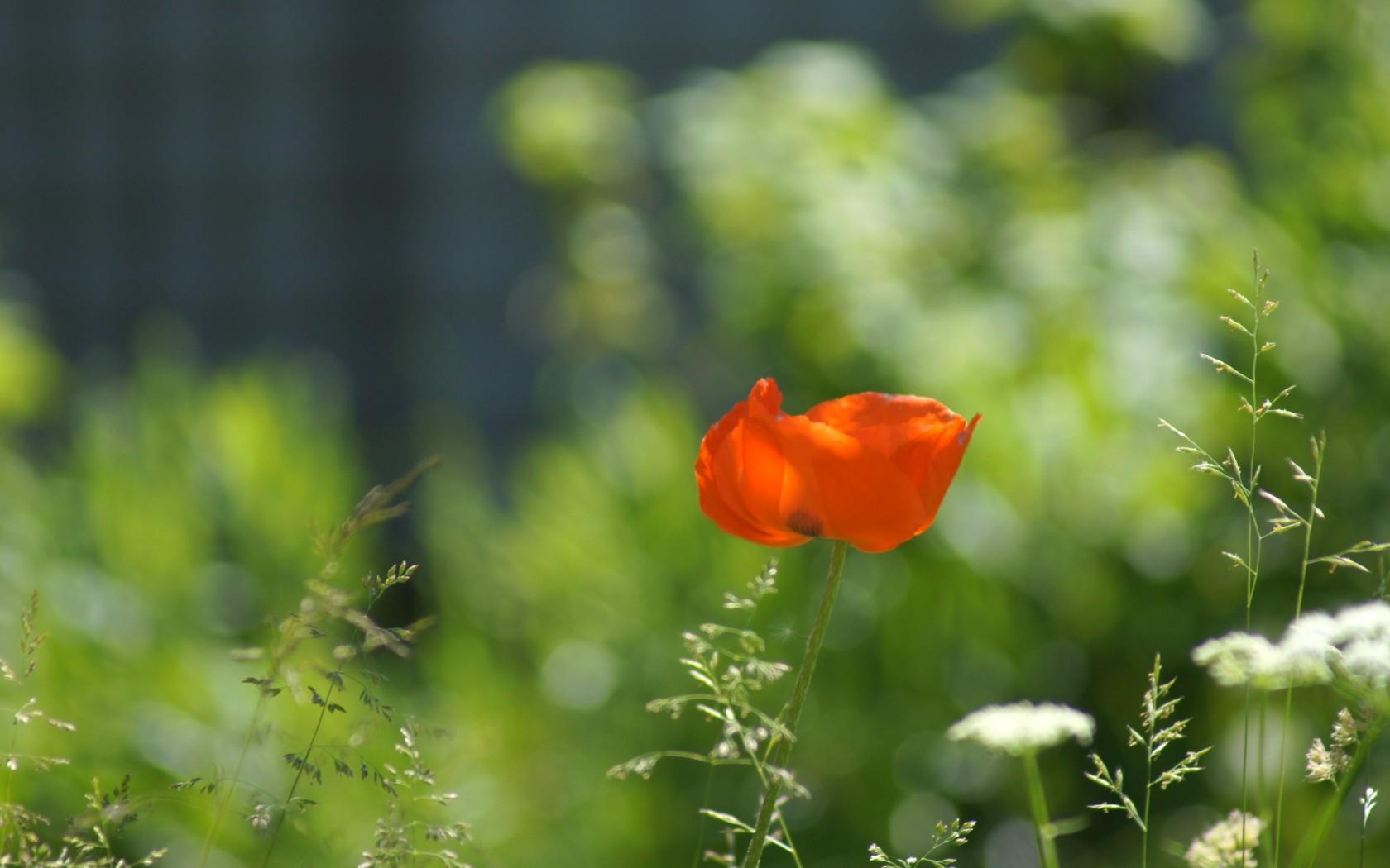 Фото клипарт – Луга, цветы, лето (76 ...: nevsepic.com.ua/ostalnoe-bez-razdela/20600-foto-klipart-luga-cvety...