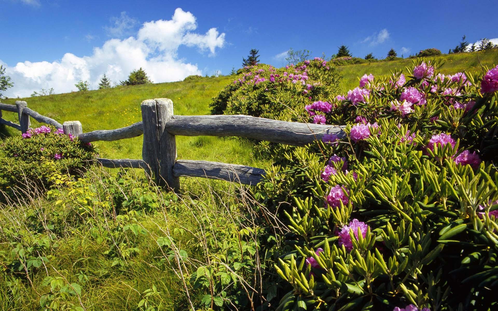 ставил землю дом луг цветы фото редко