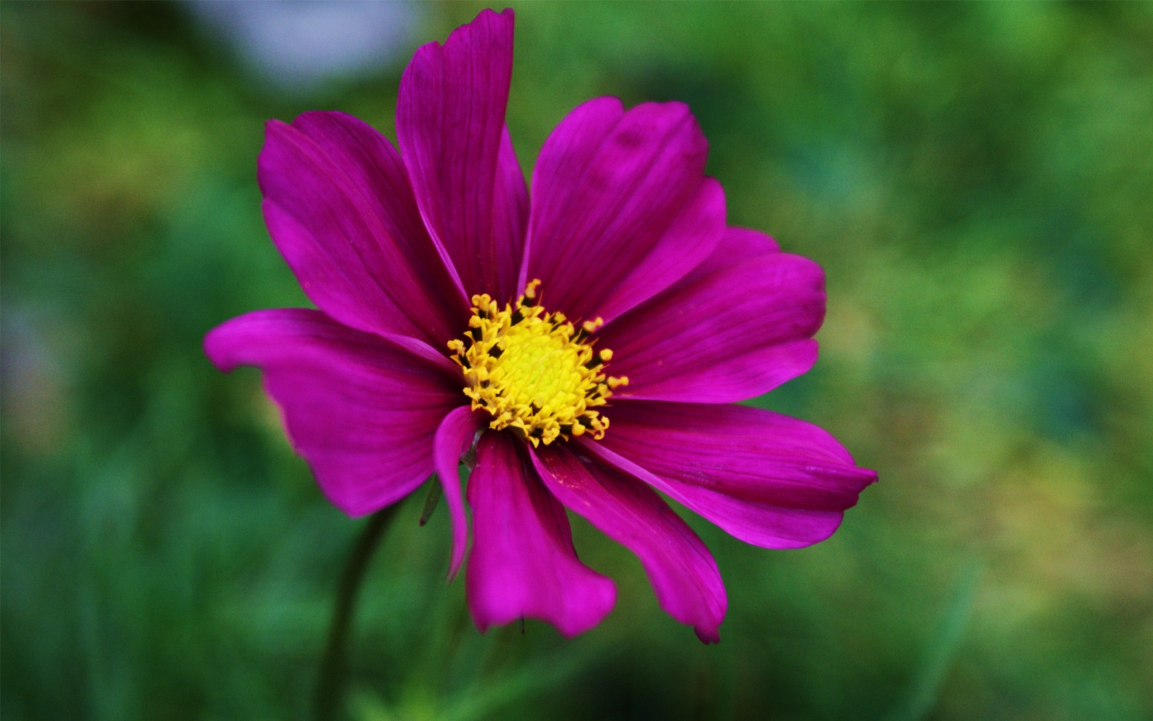 Фото клипарт – Луга, цветы, лето (76 ...: nevsepic.com.ua/ostalnoe-bez-razdela/page,2,20600-foto-klipart-luga...