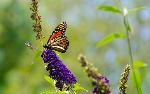 Фото клипарт – Луга, цветы, лето (76 фото)