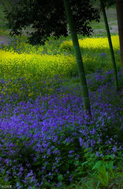 Мир в Фотографии - World In Photo 827 (62 фото)