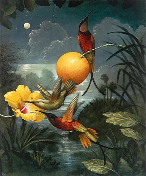 Цветы и птицы художника Кевина Слоана (26 фото)