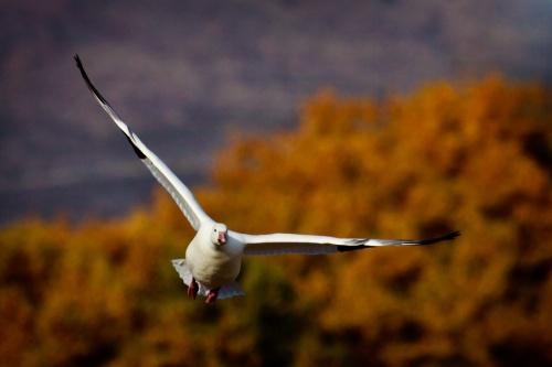 Мир в Фотографии - World In Photo 876 (61 фото)