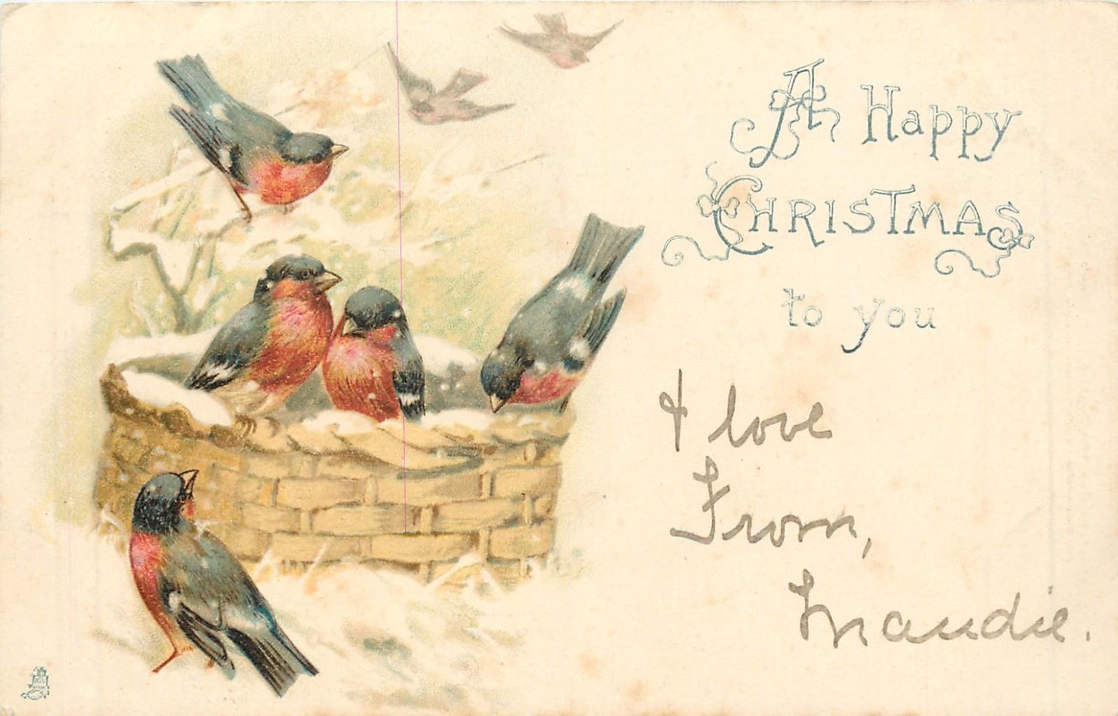 Птицы почтовые открытки