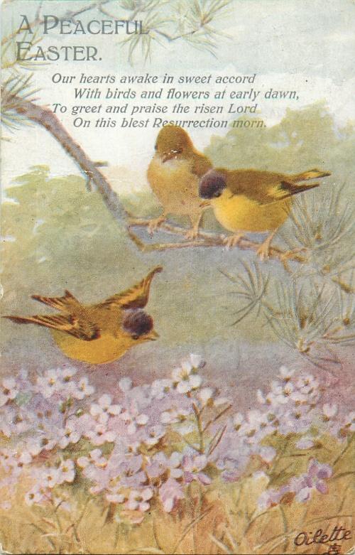 Открытки винтажные - Птицы 2 (89 фото)