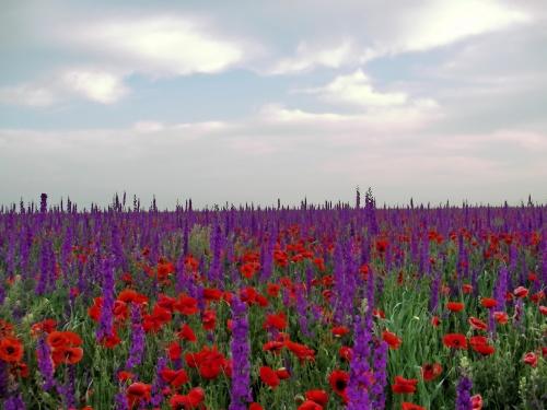 Времена года (Photo Seasons HD) (417 фото)