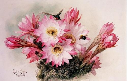Винтаж - Художник Raoul Maucherat De Longpre - Цветы (76 работ)