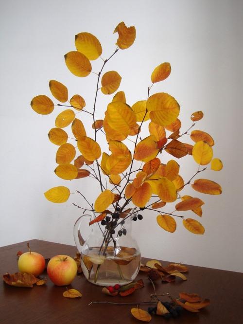 Осенний фото натюрморт (22 фото)