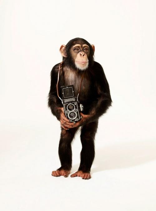 Фотограф Andrew Eccles (294 фото)