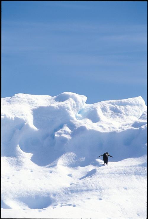 Antarctica (101 фото)