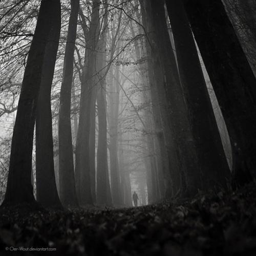 Фотограф Oer-Wout (219 фото)