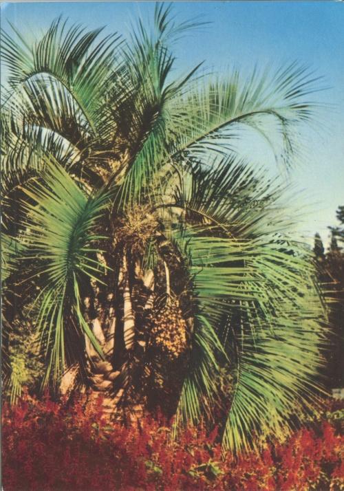 Сответские открытки. (39 Часть). Абхазия (4 открыток)