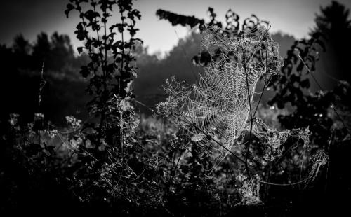 Мир в Фотографии - World In Photo 882