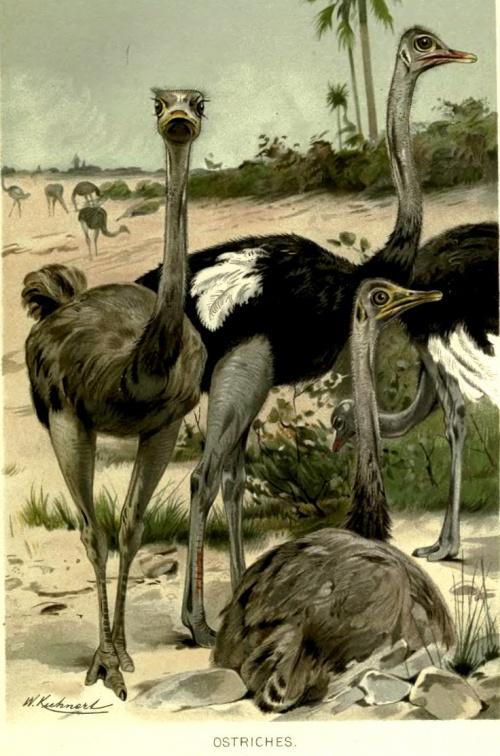Художник - анималист Friedrich Wilhelm Kuhnert, (1865-1926) (168 работ)