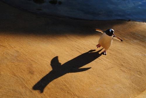 Мир в Фотографии - World In Photo 915 (100 фото)