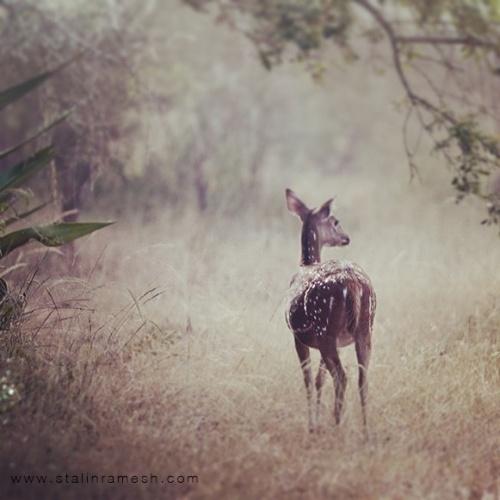 Мир в Фотографии - World In Photo 914 (100 фото)
