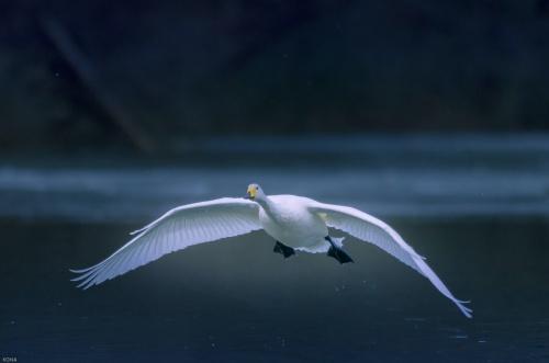 Мир в Фотографии - World In Photo 924 (100 фото)