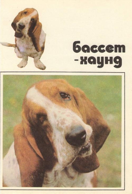 Набор открыток - НАШИ ВЕРНЫЕ ДРУЗЬЯ (46 фото)