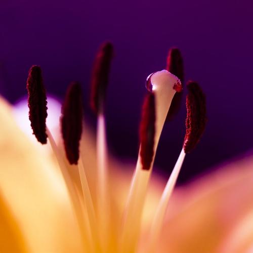 Brandt Campbell & Placid Larry - Dew Drops (34 фото)