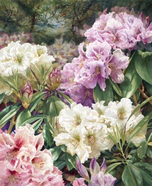 Цветы художника Darryl Trott (41 работ)
