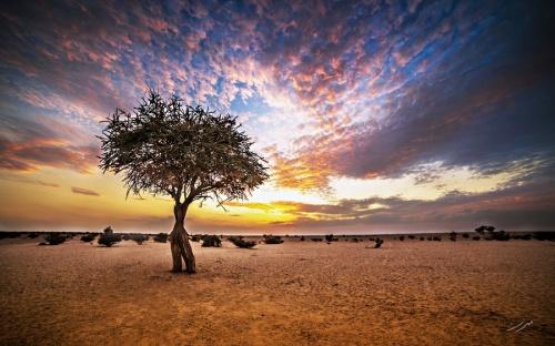 Мир в Фотографии - World In Photo 903 (100 фото)