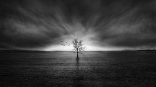 Фотограф Julien Chauvin (21 фото)