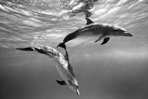 Фотограф Kurt Arrigo (155 фото)