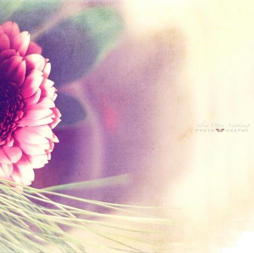 Цветы silviaON (31 фото)