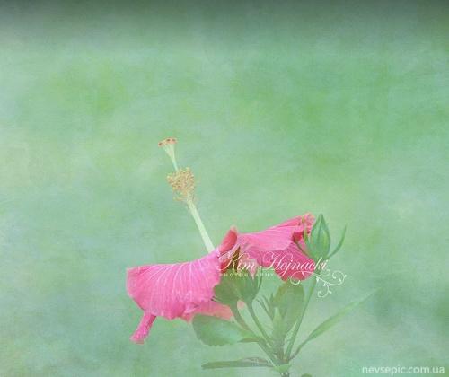 Цветы Kim Hojnacki (90 фото)