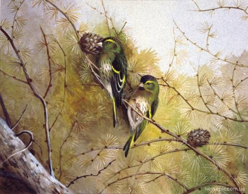 Художник - иллюстратор Archibald Thorburn (1860-1935) (171 работ)